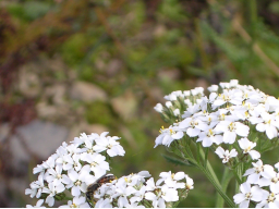 Webinar: Die Kraft unserer Heilpflanzen - Teil 2