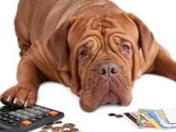 Webinar: Kassensturz in der Hundeschule - was nun?