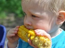 """Webinar: """"Mama, das schmeckt mir nicht"""" - Wie wir unsere Kinder unbewusst konditionieren"""