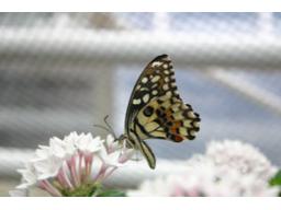 Webinar: Aromatherapie - Hilfe aus der Natur für Körper und Geist