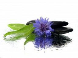 Webinar: BACHBLÜTENSEMINAR Teil 1 Blüten gegen die ANGST