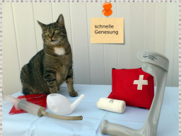 Webinar: Erste Hilfe Theorie-Kurs für Hunde und Katzenhalter