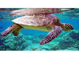 Webinar: Trendfolgesystem - The Turtles Strategy