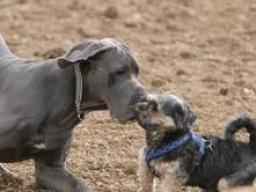 Webinar: Online - Hundestammtisch