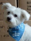 Blanco Perro