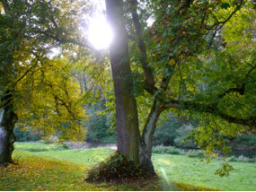 Webinar: Heilkraft der Bäume, Götterwelten und Pflanzenmagie