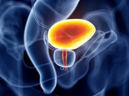 Webinar: Krebs-Resilienz | Harnblasen-Gesundheit