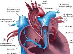Webinar: Infarkt- und Embolie-Risiko oder Herz- und Blutgesundheit