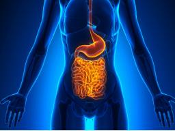 Webinar: In 9 Monaten zur Zell-Gesundheit | Gewichts- und Zell-Gesundheit