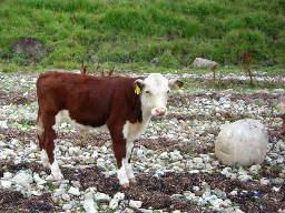 Webinar: Stier-Neumond und die aktuelle Zeitqualität