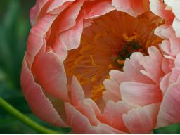Webinar: Vortrag zum Thema Spirituelle Transformation