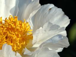 Webinar: Erdemeditation