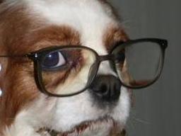 Webinar: Infoabend zur Ausbildung Hundeernährungsberater