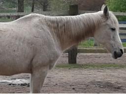 Webinar: Ausbildung zum Pferdeernährungsberater Block V Erkrankungen und Diätetik