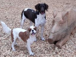 Hundeenährungs-/Gesundheitsberater Teil 4