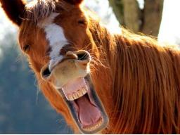 Infoabend zur Ausbildung Pferdeernährungsberater