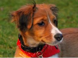 Ausbildung zum Hundeernährungsberater Block V Sonderfälle Welpe, Senior, Allergie ...