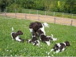 Webinar: Hundeernährungs- und Gesundheitsberater Teil 4 Welpe und Hundezucht