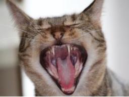 Ausbildung zum Katzenernährungsberater, Block II Rationsberechnung