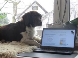 Gesundheitsberater für Hundeernährungsberater Teil I