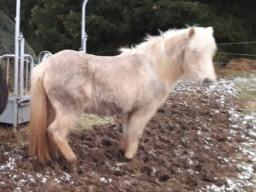 Webinar: Ernährungsberatung für Pferde