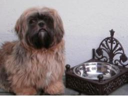 Ausbildung zum Hundeernährungsberater Block II Rationsberechnung, Barfration