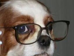 Infoabend zur Ausbildung Hundeernährungsberater