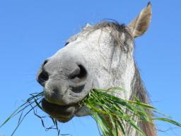 Webinar: Ausbildung zum Pferdeernährungsberater Block I Verdauungsphysiologie