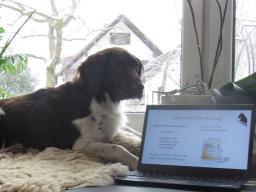 Webinar: Einführung Ausbildung Hundeernährungsberater