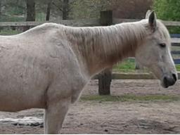 Webinar: Ausbildung zum Pferdeernährungsberater, Block VI Erkrankungen und Diätetik