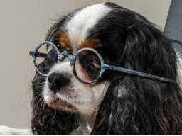 Prüfungsblock Hundeernährungsberater