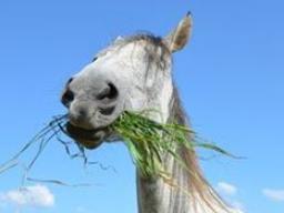 Ausbildung zum Pferdeernährungsberater, Block I Nährstoffe
