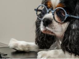 Ausbildung zum Hundeernährungsberater Prüfungsblock