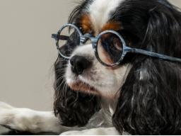Webinar: Hundeernährungs-/Gesundheitsberater Teil 8