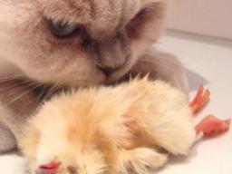 Webinar: Rohfleischfütterung für Hund und Katze