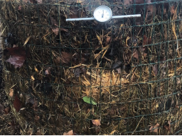 Webinar: So stelle ich guten Kompost her