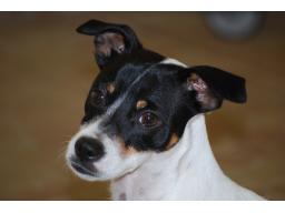 Webinar: Info-Webinar zur Hundetrainer-Ausbildung