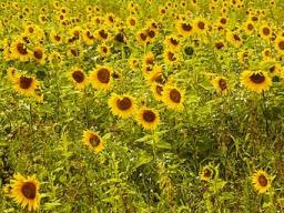 Webinar: Optimismus kultivieren - für mehr innere Widerstandskraft